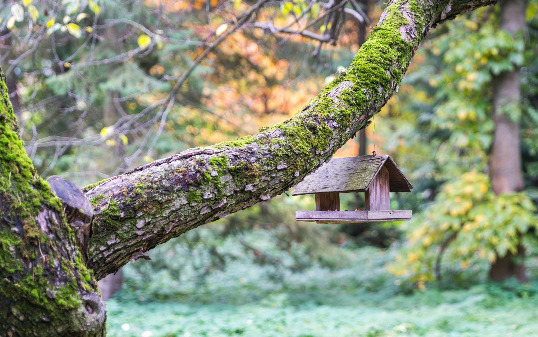 Когда карантин в радость: 5 домов для комфортной самоизоляции